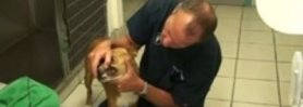 Anemia and Blood Transfusion Dog