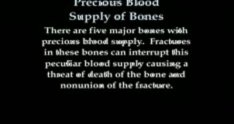 Precious Blood Supply of Bones Animation - Everything You Need to Know - Dr. Nabil Ebraheim, M.D.